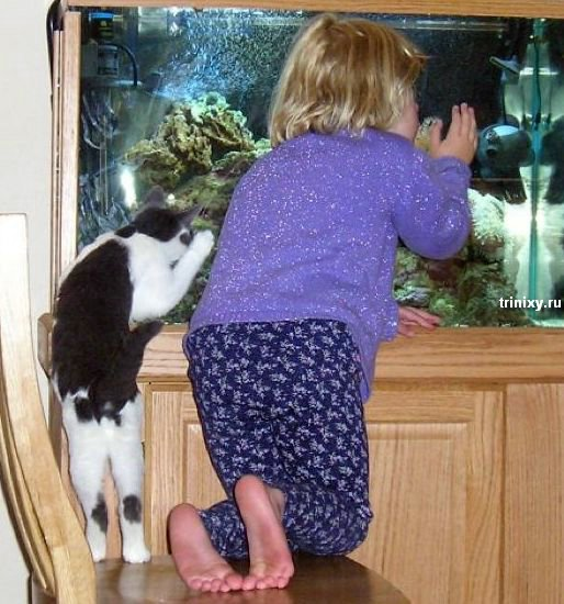 Забавные животные (100 фото)