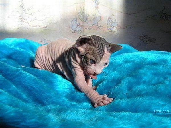 Позитивчик с котятами (28 фото)