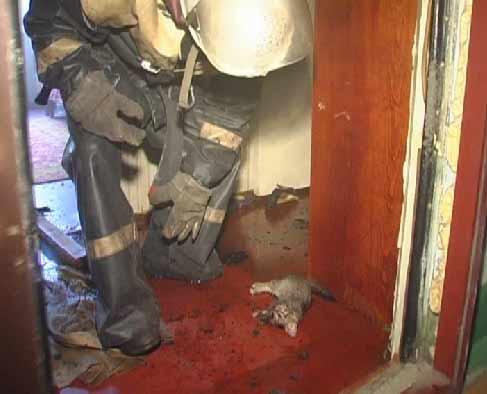 В Киеве пожарные спасли котенка (7 фото)