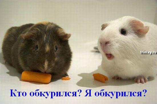 О чем думают животные. Мегапозитив (35 фото)