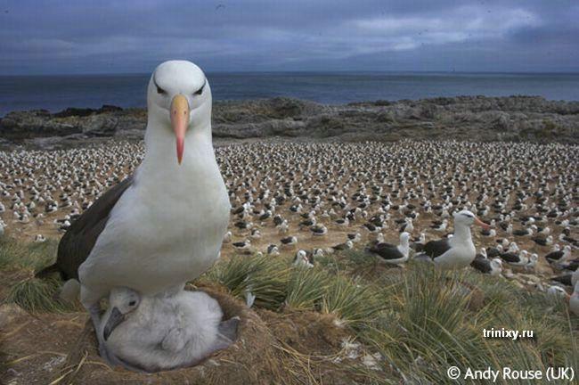 Фотографии дикой природы (30 фото)