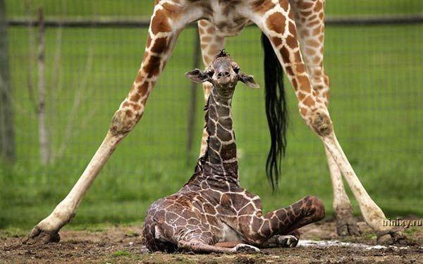 Пост про животных (12 фото)