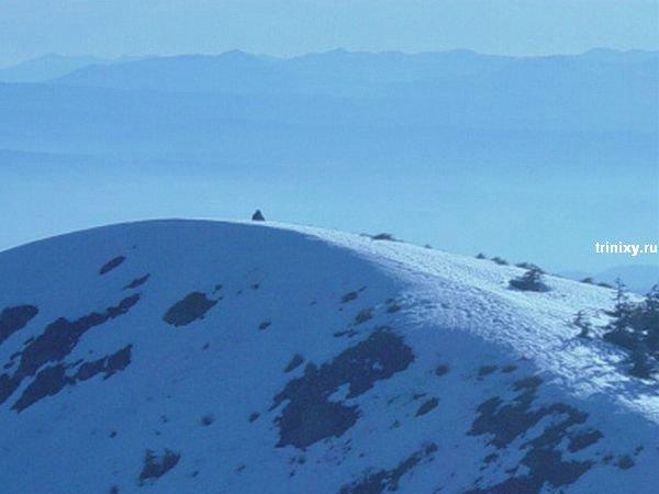 Самые известные фотографии снежного человека (16 фото)