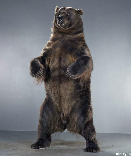 Медведи Джилл Гилберг (35 фото)