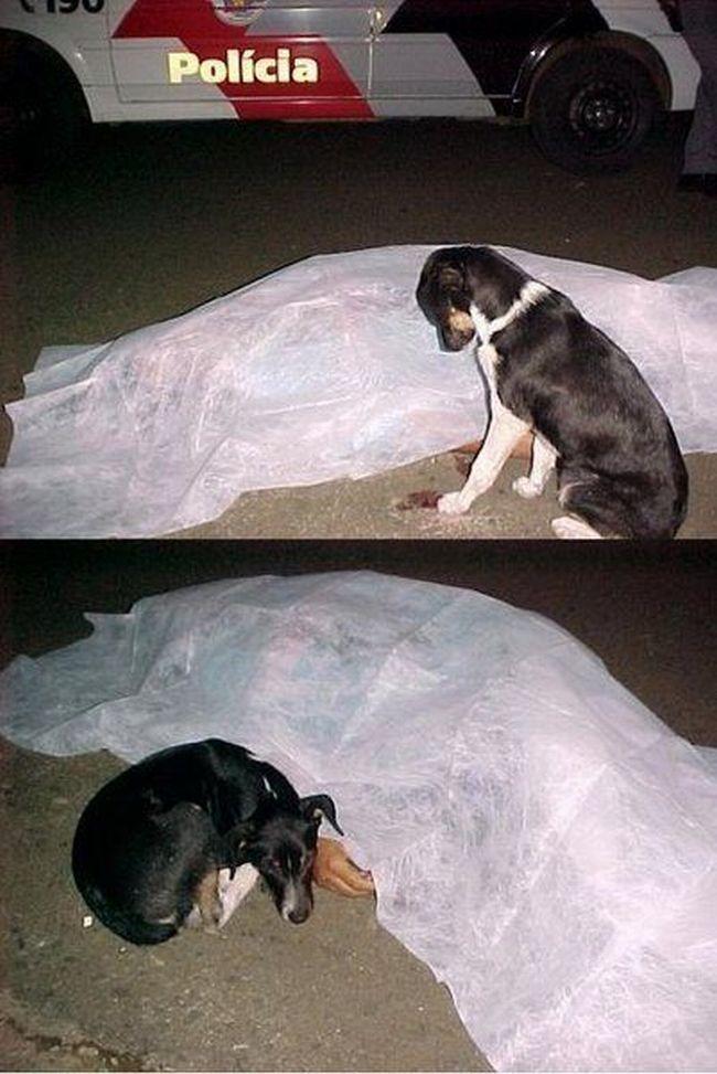 Фото дня. Собака остается всегда преданной вам...