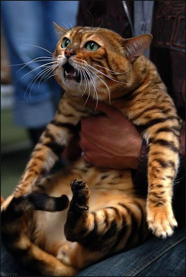 Коты. Лучшее (70 фото)