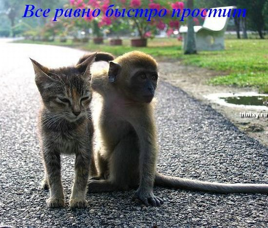 Всегда помните о друзьях (20 фото)