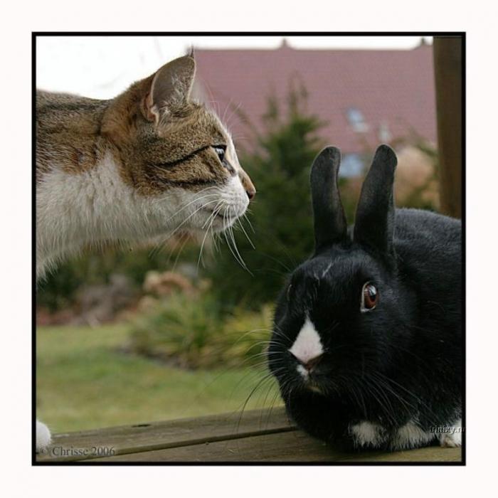 Архивное. Фотосессия одного классного кота (28 фото)