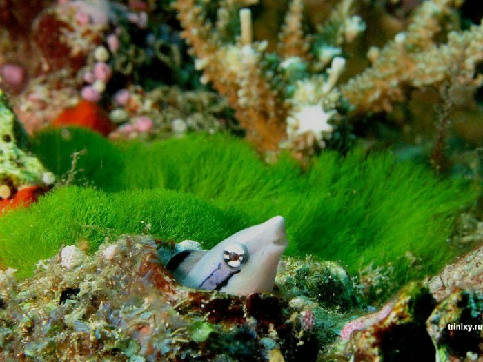 Красота подводного мира (66 фото)