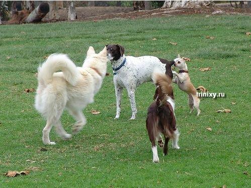 Забавные собаки (58 фото)