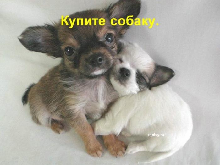 Специально для девушек. Почему собаки лучше чем.... (21 фото)