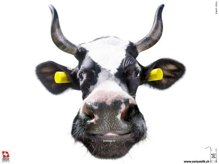 Позитивчик. Йога-Коровы (15 картинок)