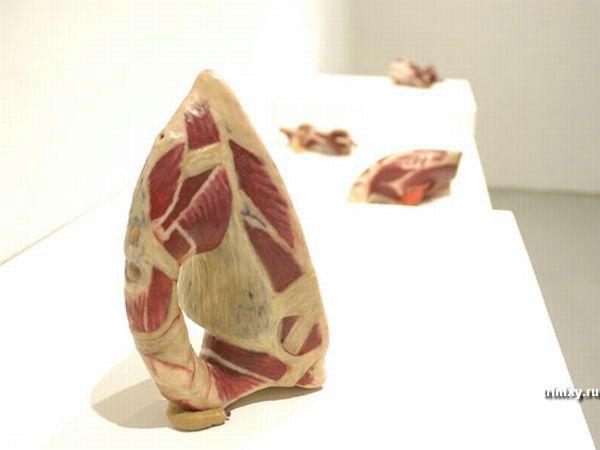 Искусство из мяса (16 фото)