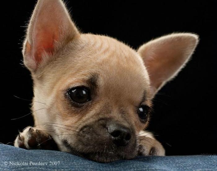 Картинки маленькие собаки прикольные