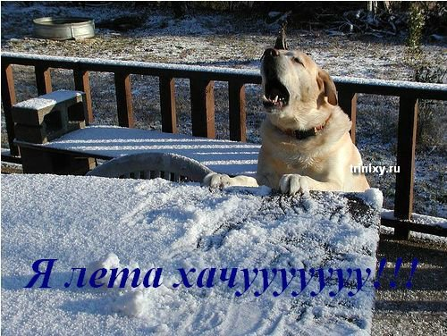 Зиме посвящается... (18 фото)
