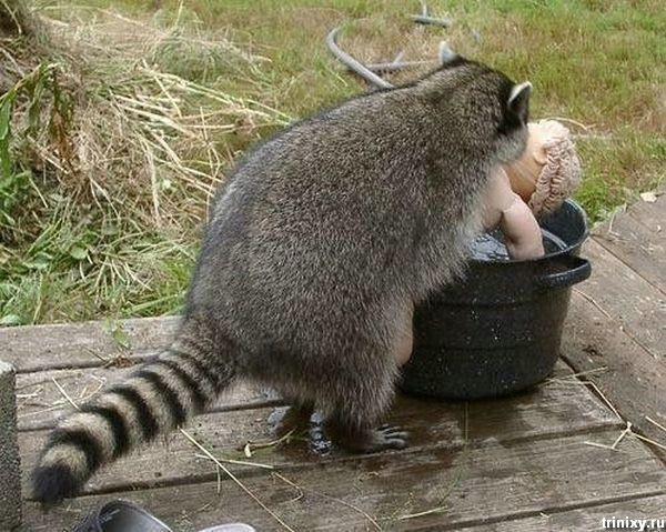 Позитивный пост о животных (85 фото)