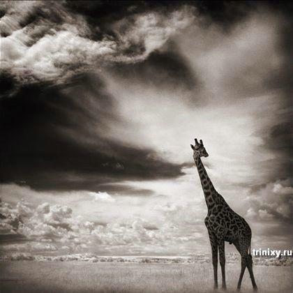 Умопомрачительные фотографии животных (46 фото)