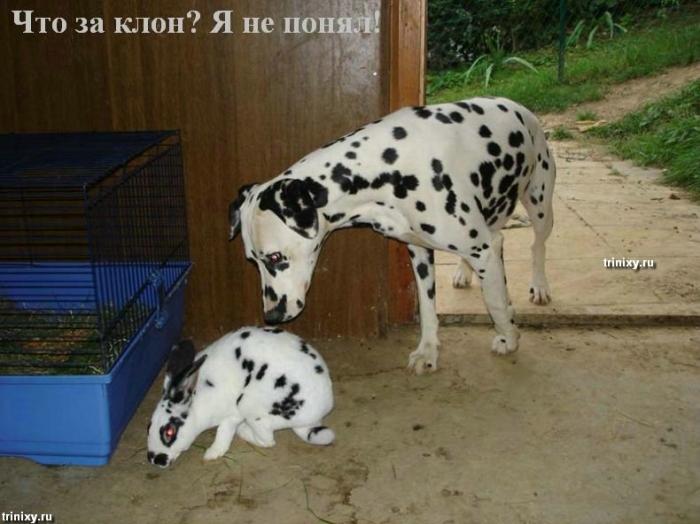 О чем думают животные. Мегапозитив. Часть 2 (41 фото)