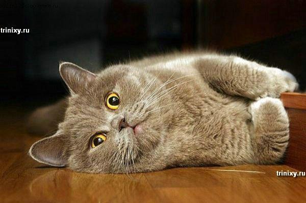 Позитивчик.  Котики.