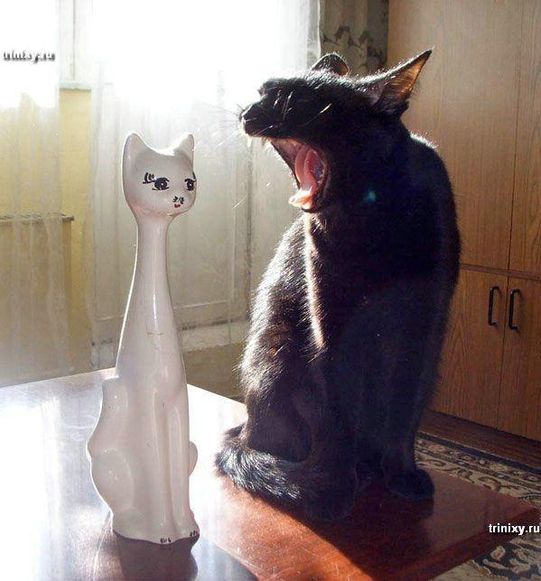 Коты, как люди (31 фото)