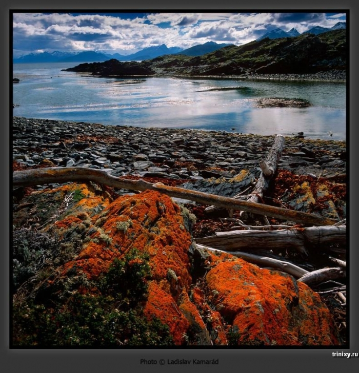 Красивые фотографии дикой природы (102 штуки)