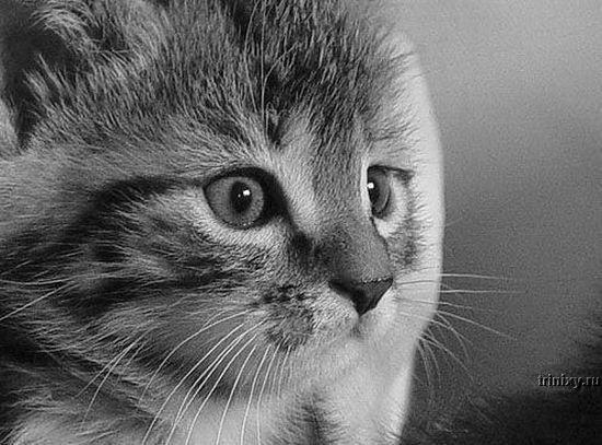 Классная подборка котят (42 фото)