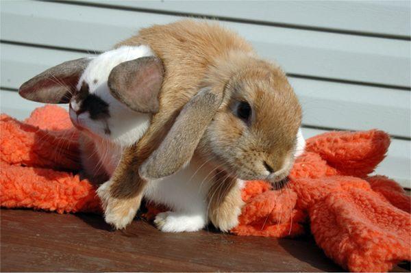 Картинки кролики с прикольными надписями