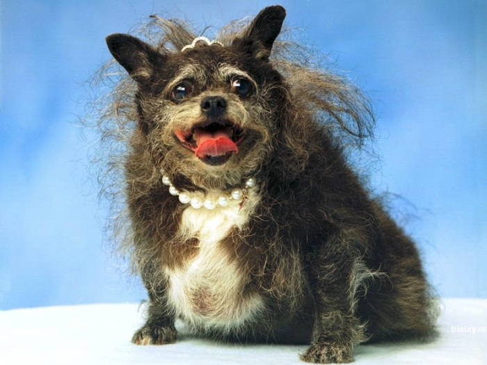 Самая красивая собака в мире (5 фото)