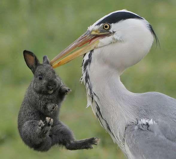 Ух.. Жестоко... Зайца съели (4 фото)
