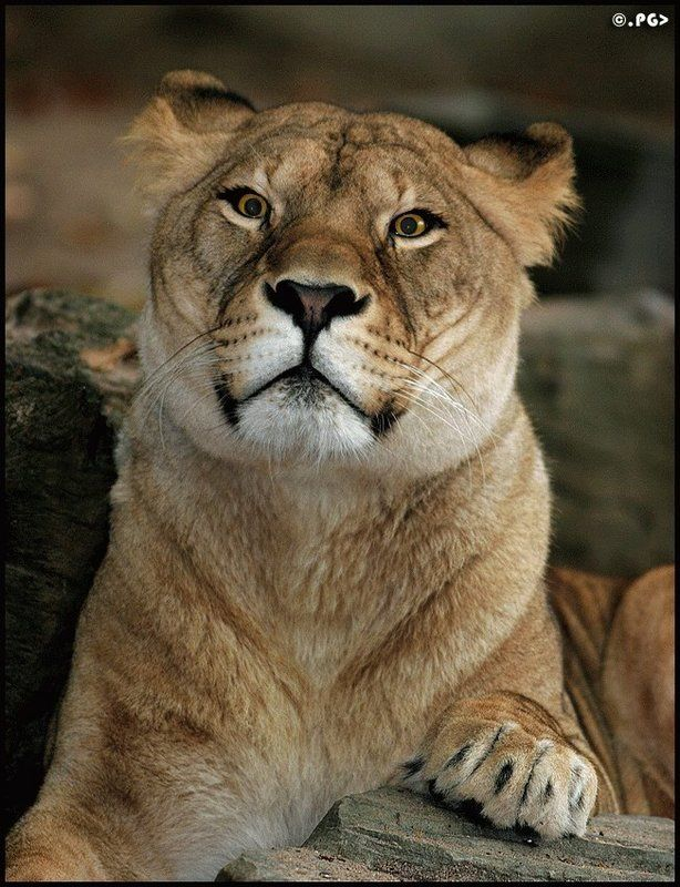Самые красивые фотографии животного мира (39 штук)