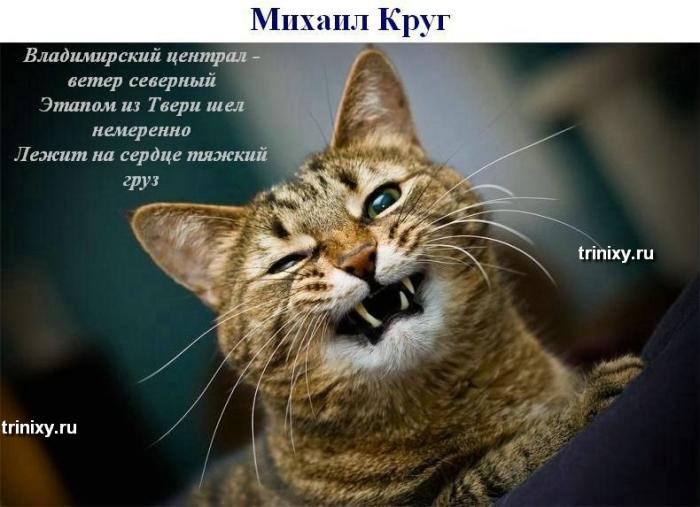 Мегапозитив. Поющие коты (27 фото)