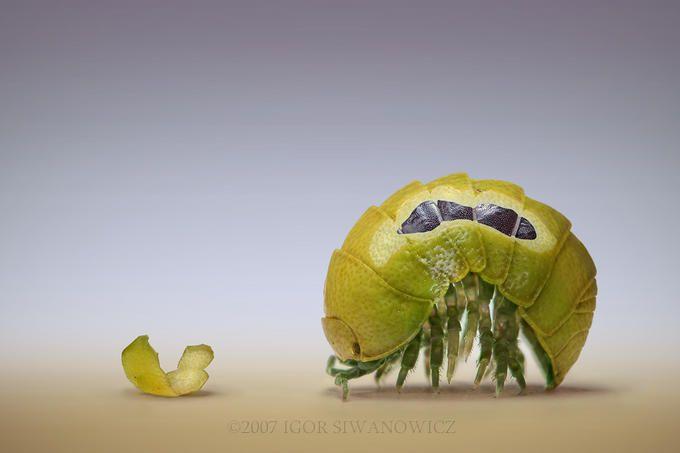Лучшие работы Igor Siwanowicz (127 фото)