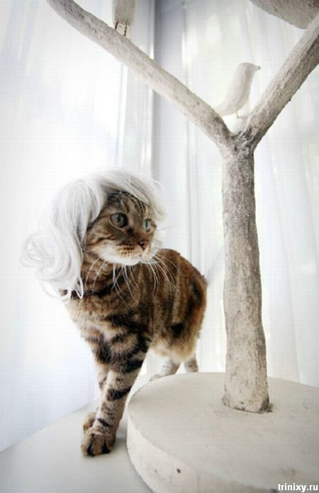 Парики для котов (10 фото)