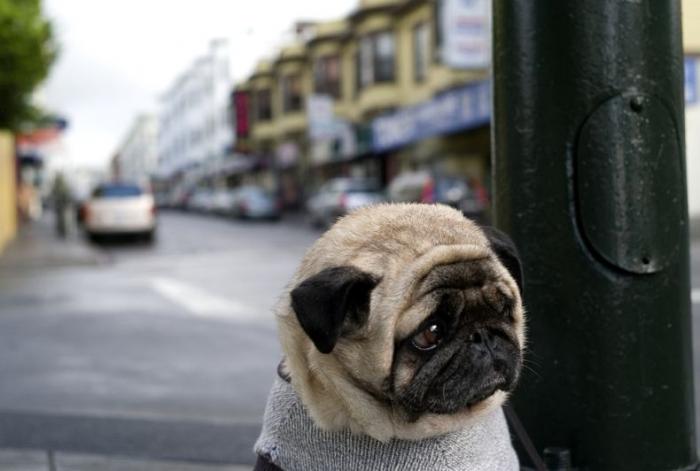 Одиночество или в ожидании хозяина (4 фото)