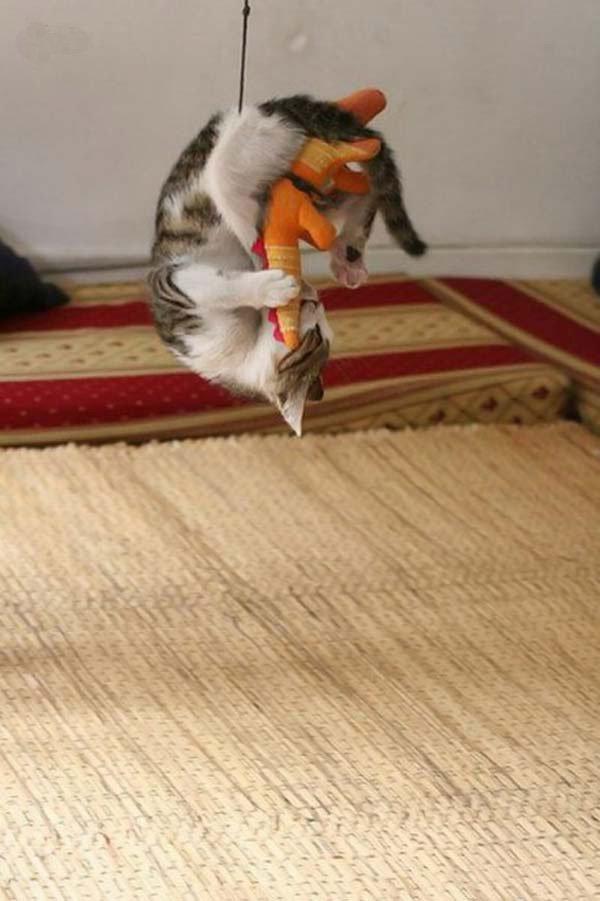 Схватка хищников (4 фото)
