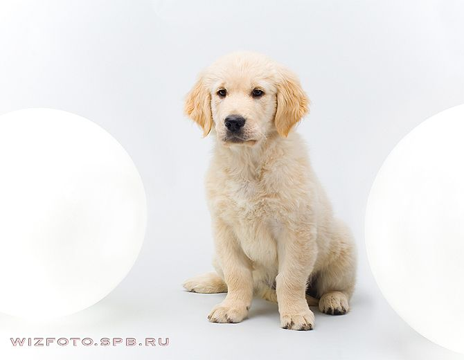 Позитив. Классные животные (89 фото)