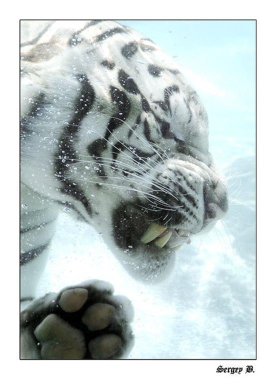 Ни дня без позитива. Забавные животные (34 фото)