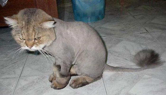 Красивые коты (11 Фото)