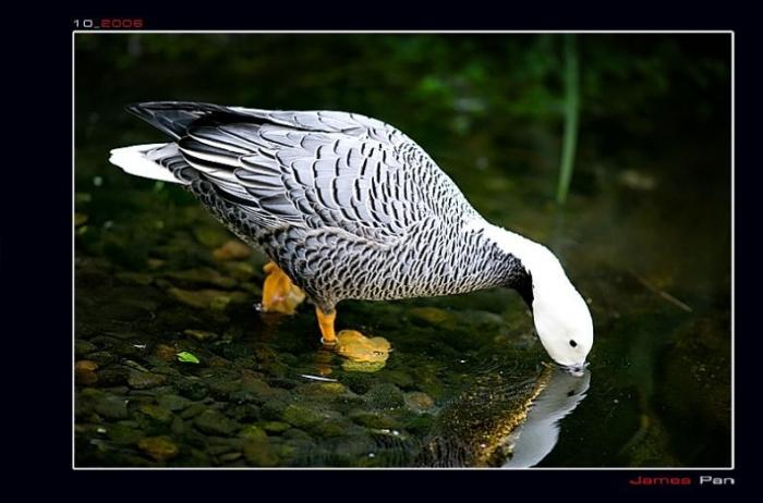 Классные фотографии животного мира (79 фото)