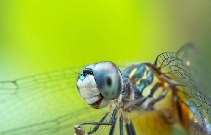 Лучшие фото National Geographic Contest 2007 - Животные (16 штук)