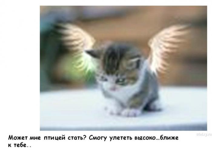 Позитивненько. История про котика и солнышко (14 фото)