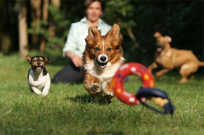 Собачьи бега (60 фото)