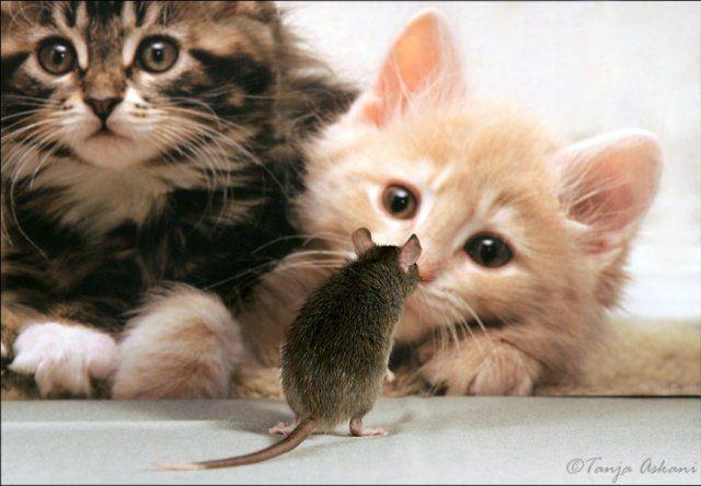 Животные тоже умеют любить 22 фото