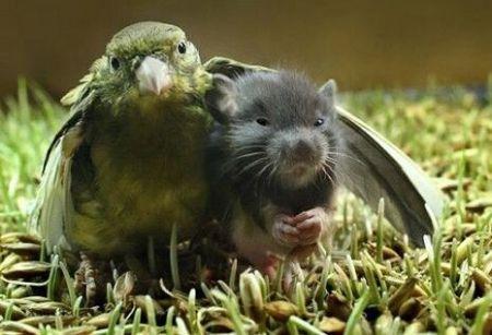 Животные тоже умеют любить (22 фото)