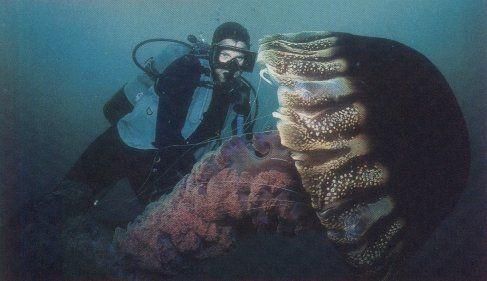 Гигантские медузы (7 Фото)