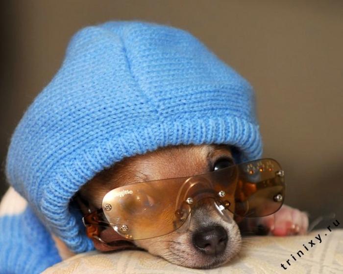 Позитив. Фотоальбом гламурной собачки (38 фото)