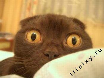 Классификация котов (34 фото)