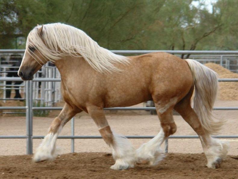 Необычные лошади 30 фото