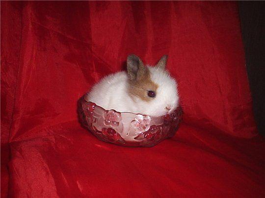 Позитив. Маленькие кролики (40 фото)