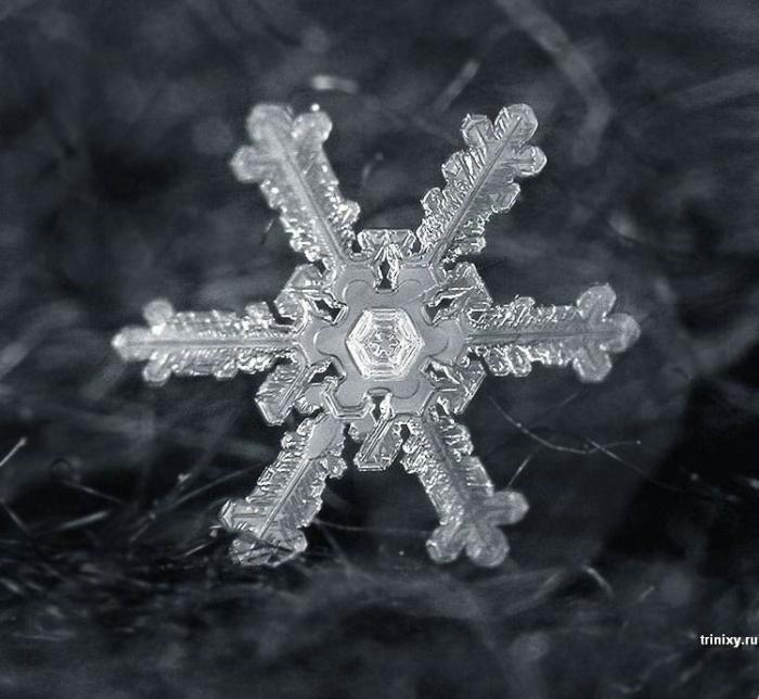 Снежинки - чудо природы (25 фото)